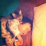 makicocomo-chat-dormir