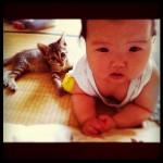 makicocomo-chaton-bebe