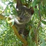 Chat dans arbre grimpe