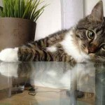 Photo de chat sur table basse