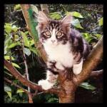 Chaton dans arbre