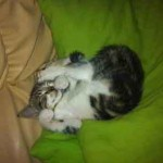 Photo chaton dort sur couverture