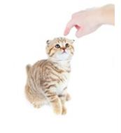 corriger un chat