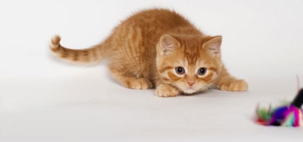 apprendre en jouant avec son chat