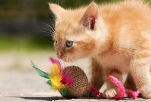 Jouer avec un chaton
