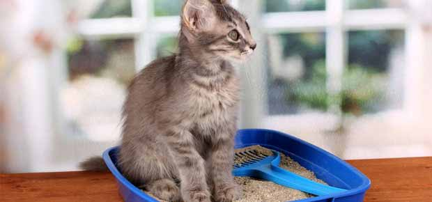 choisir sa litière pour chat