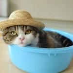 chat a la plage avec chapeau