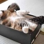 chat dans boite a chaussure
