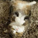 chat sur tapis