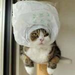 Un chat rigolo