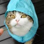 chat avec chapeau trop mignon