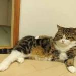 chat prend la pose