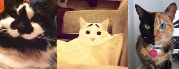 chat rigolo et marrant