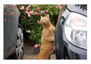 voyager en voiture avec un chat