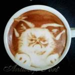 Chat grincheux grumpy cat