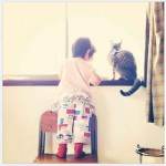 chat rebord fenetre