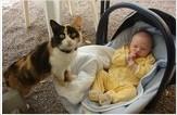 J'ai un bébé, un chat peut venir dans son landau et l'étouffer.