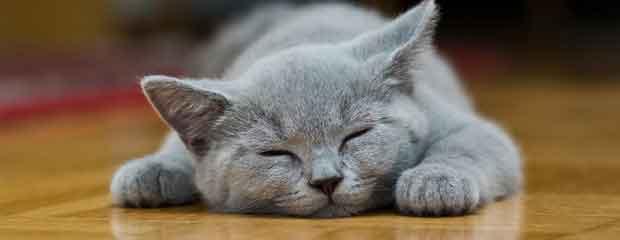 mon chat m'aime t'il