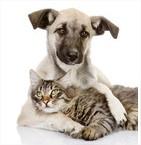 Les chats ne s'entendent pas avec les chiens.