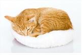 Un chat, ça dort toute la journée.
