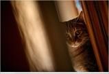 la garde de chat pendant les vacances