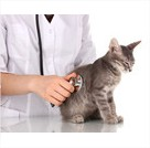 erreur pas steriliser chat