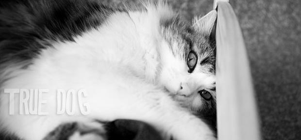 aurelie di pietrophotographe animalier chat