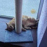 faire garder son chat en pension pour chat cats cocoon