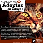 Refuge pour chats asclaf