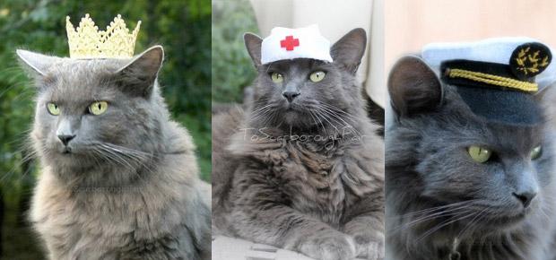 déguiser son chat