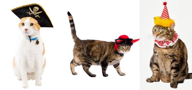 d guiser son chat avec un d guisement pour chat. Black Bedroom Furniture Sets. Home Design Ideas