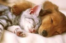 cohabitation-chat-et-chien