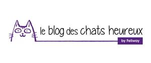 blog des chats heureux interview
