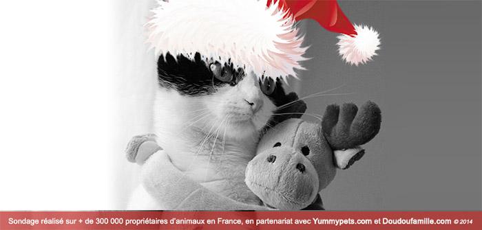 idee cadeau pour chat