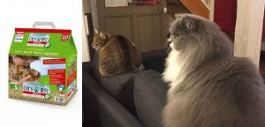 Litière Cat best