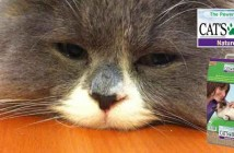 test litiere cats best