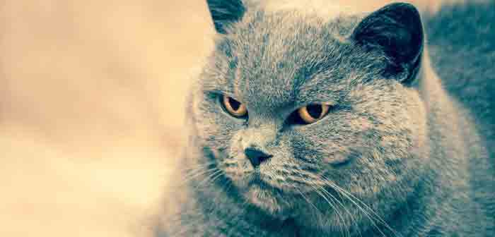 Chat sterilise et prise de poids