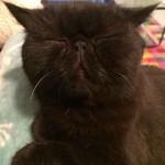 chat noir marrant