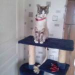 chat sur arbre a chat