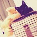 chaton corbeille