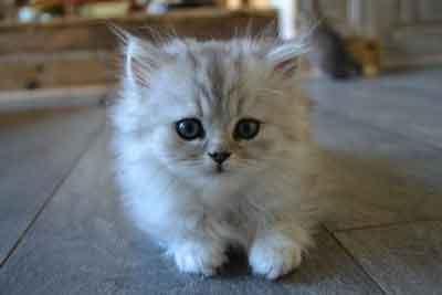 Chaton le plus mignon du monde tout pour mon chat - Chat tout mignon ...