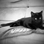 chaton tout noir
