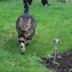jardin chat