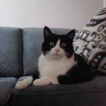 noir blanc chat