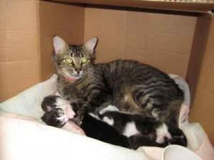 mise bas de la maman chatte
