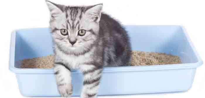 propreté du chaton pas propre