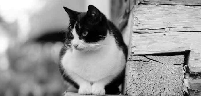 âge chat espérance de vie chat