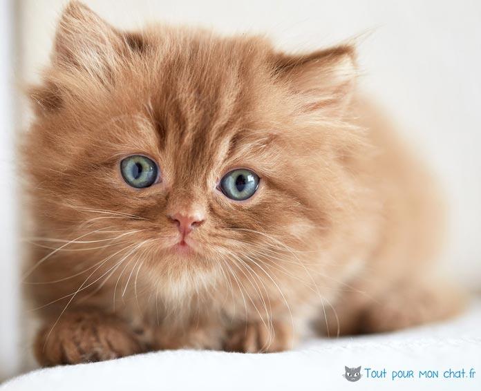 Nom de chat en n et pr nom en n pour chaton n en 2017 - Photo de chat rigolo ...