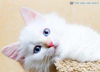 nom-de-chat-original-chats-originaux