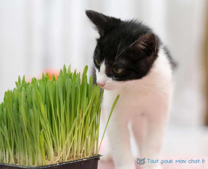 Pourquoi les chats mangent de l herbe et aiment l herbe fda8fb4233e2
